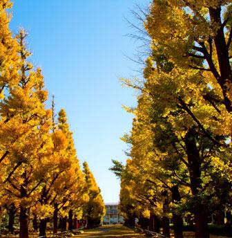 現代の大学進学について